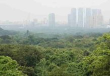 Aarey Jungle